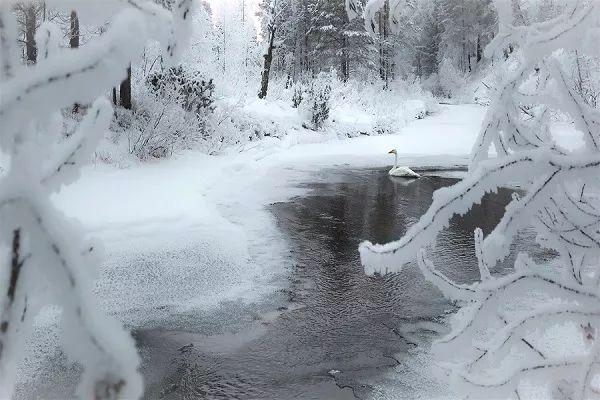 芬兰的冰雪森林