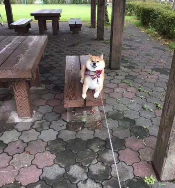 养了一只不爱回家的狗,每次遛狗都像是在放风筝