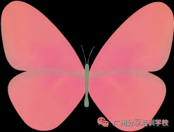 氣球蜻蜓的編制法你知道嗎?分享氣球蜻蜓的簡單做法教程