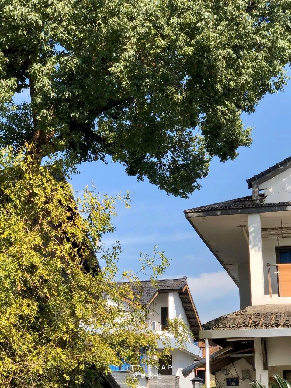 杭州自带泳池的赏枫酒店,靠颜值吸粉开业数日火了!