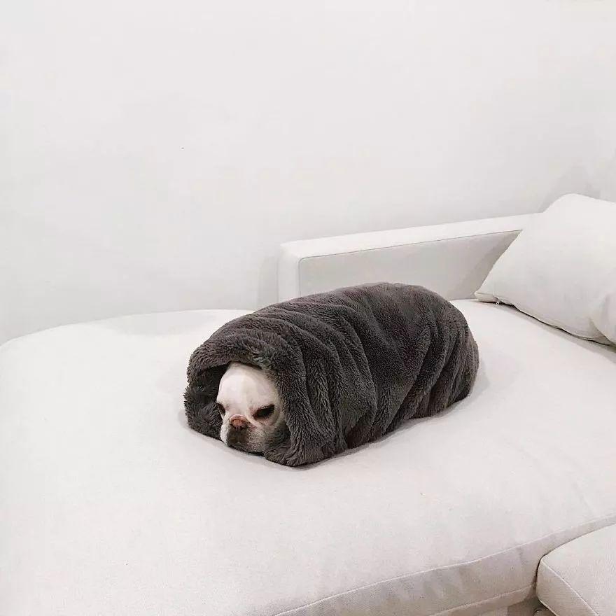 网红法斗的最新床照曝光...冬天就应该这样过!
