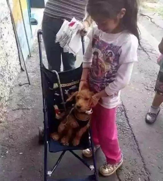 别贴了,这样的寻狗启事根本找不到狗!