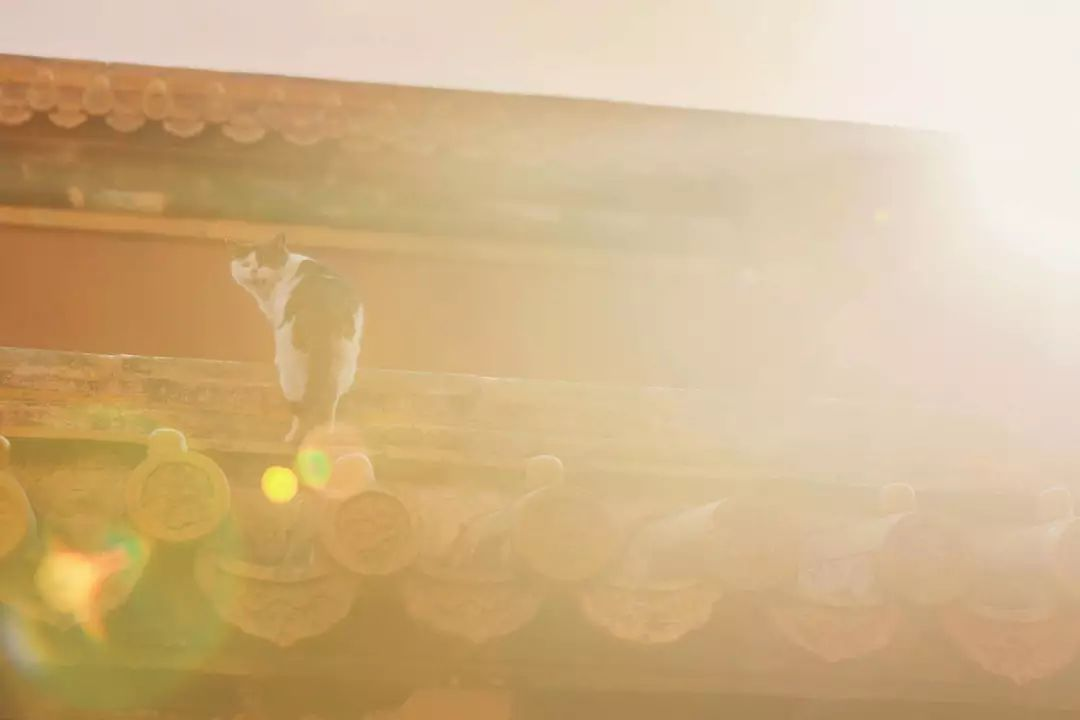 蹲守故宫3年,她拍下刷遍全网的雪景图和猫片