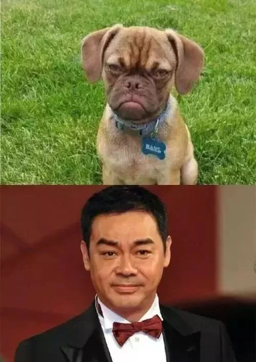 娱乐圈跟狗撞脸的明星,还真是不少!