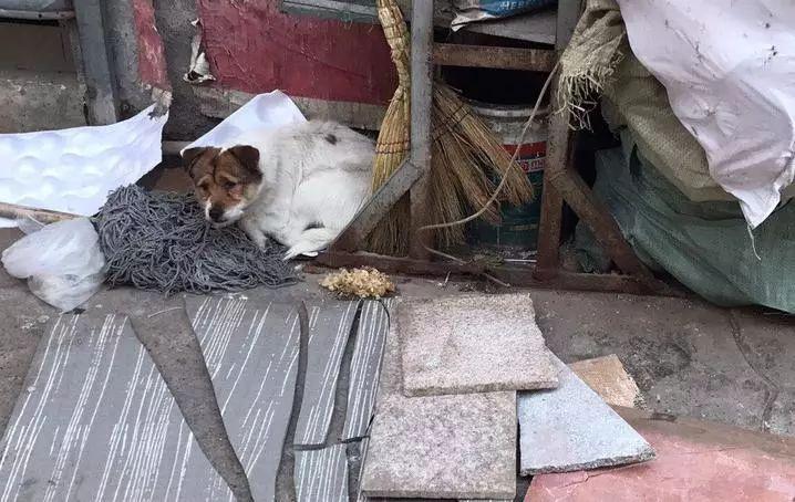 """别让我们的春节,成为狗狗的""""春劫"""""""