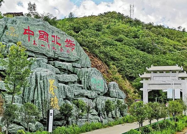 """点茶成金 荒山建起""""绿色银行""""——陕西山阳县发展茶叶产业带贫增收调查"""