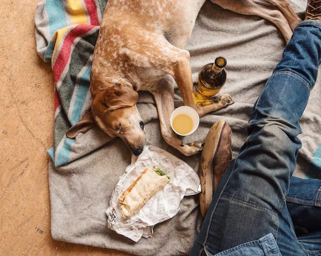 带着心爱的人和狗,来一场旅行,是多少人的梦?