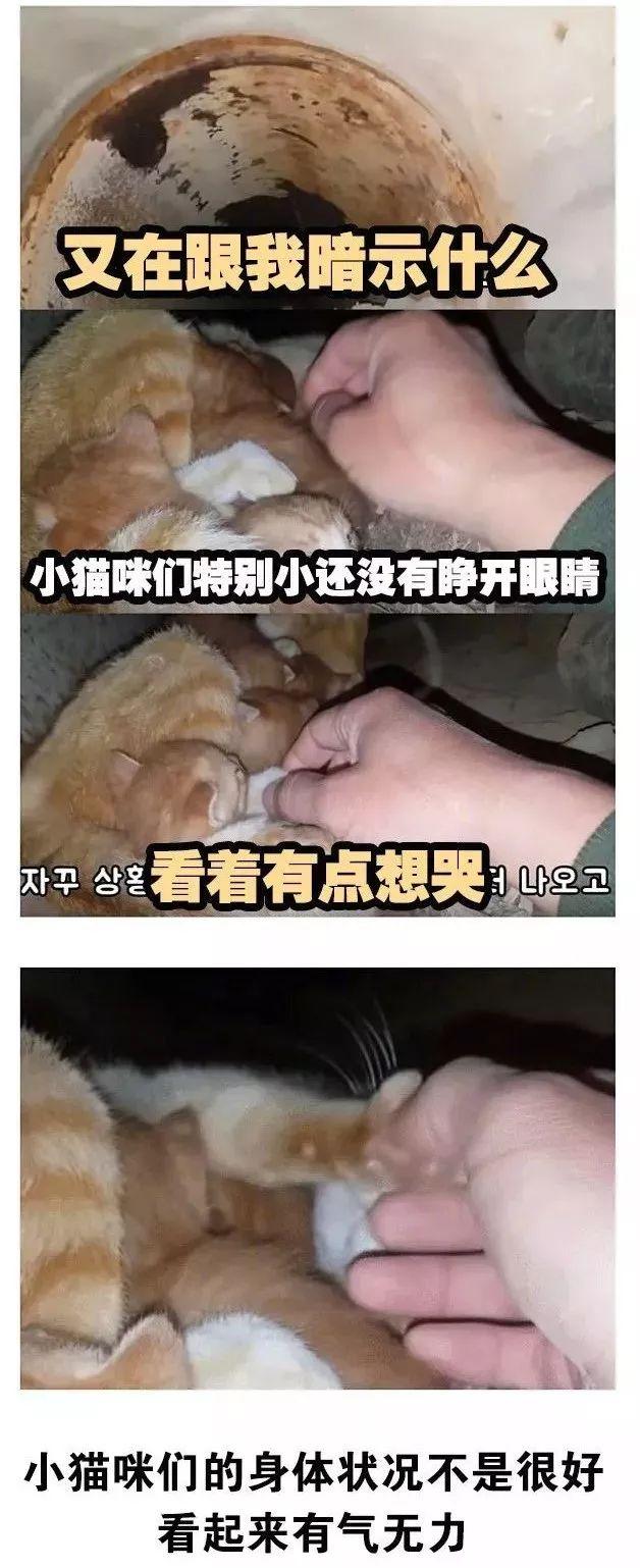 韩国大叔不喜欢猫,却坚持给流浪猫喂饭,结果…真香了!