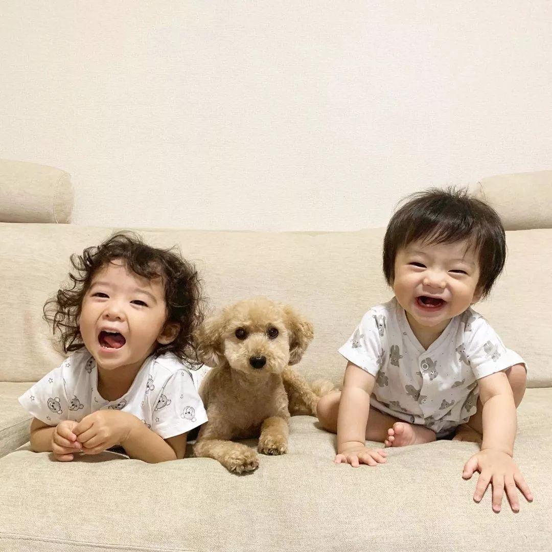 让狗狗带娃是什么体验?