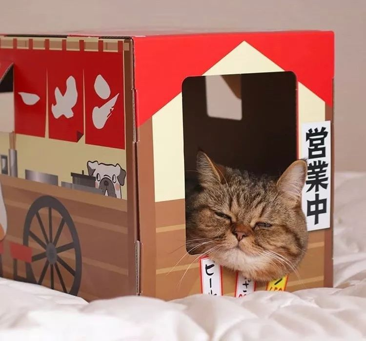 网红猫咪:寅次郎