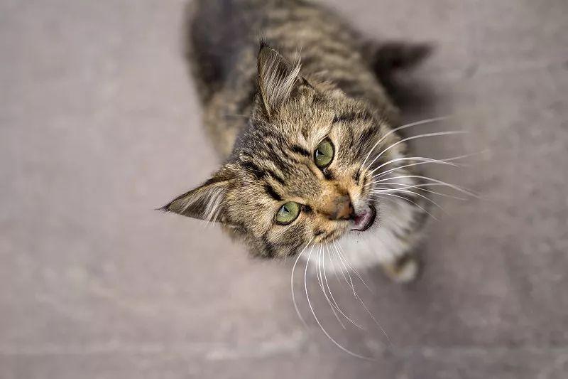在过去的72小时里,猫都经历了什么?
