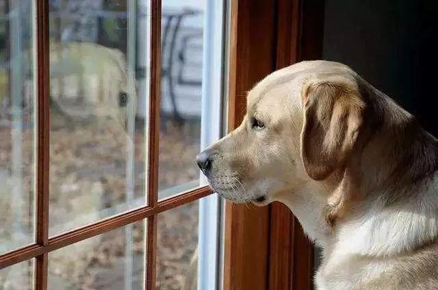"""""""这个长假,我终于体会到狗的心情了……"""""""