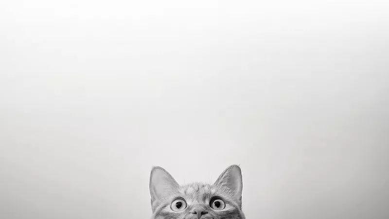"""""""封城后,幸好有他们帮我喂猫…"""""""