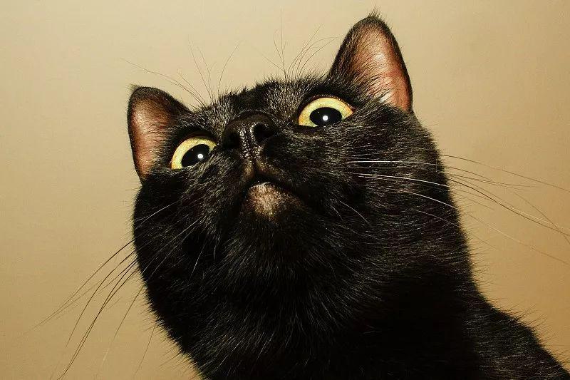 """""""家里用了84消毒液,没想到却害了我的猫…"""""""