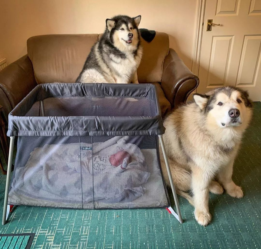 """太忙没时间照顾孩子?""""狗保姆""""了解一下"""