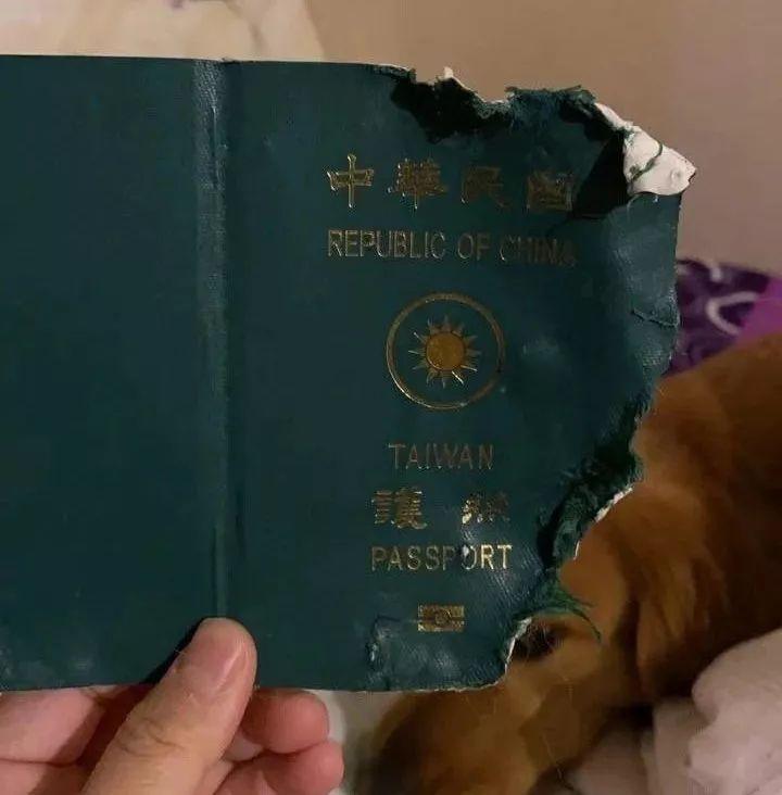 台湾网友去武汉的前一夜,护照被金毛撕碎了!