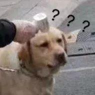"""""""花式""""抗击疫情,狗狗也不例外!"""