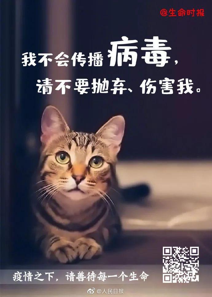 《人民日报》:宠物不会传染,请善待每一个生命!