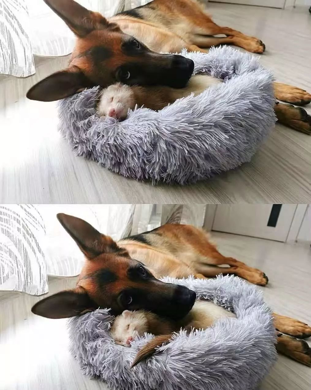 """如果动物界分职业,那狗子一定是""""交际花""""!"""