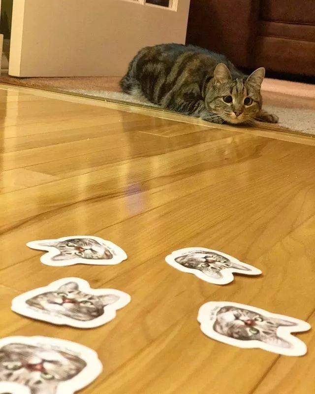 天生残疾的猫猫,却用它独特的眼睛吸引了十几万网友