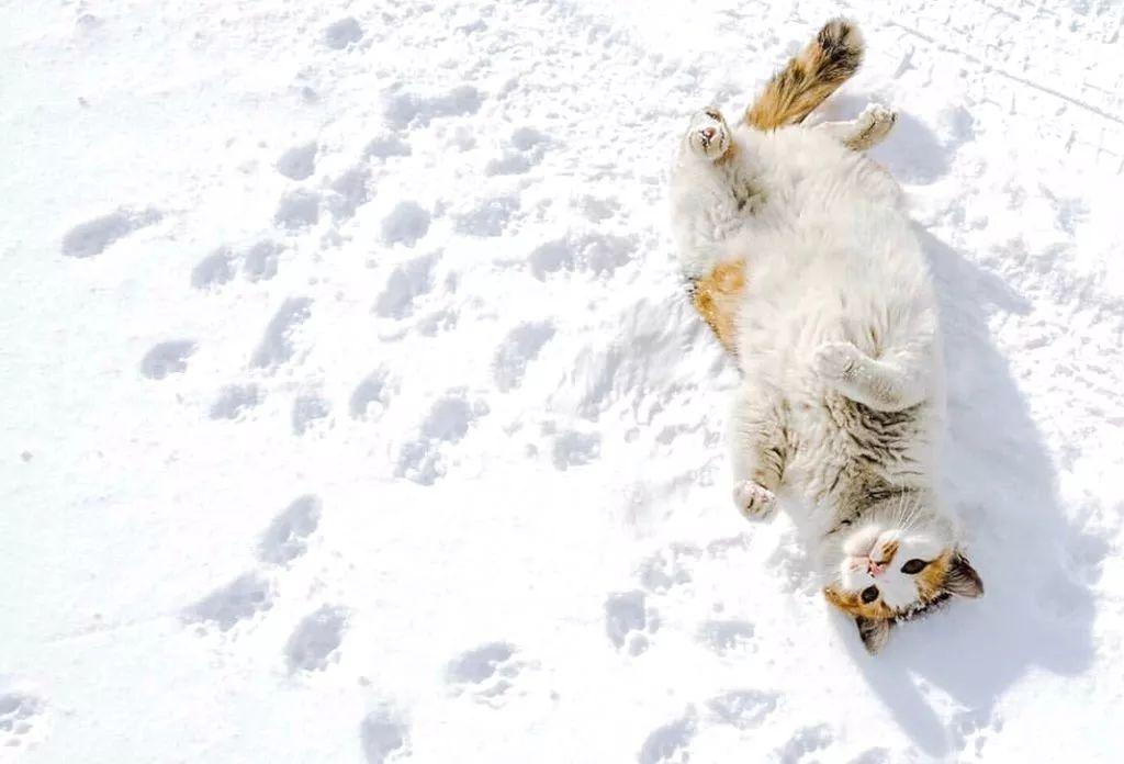 滑雪、看海、打地洞…原来北海道的流浪猫是这么过冬的!