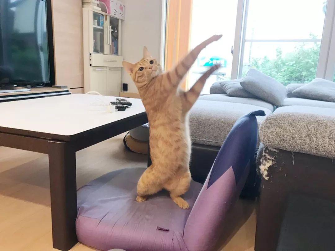 因为戴口罩陪主人买菜,这只猫被日本的沙雕手办大佬盯上了!