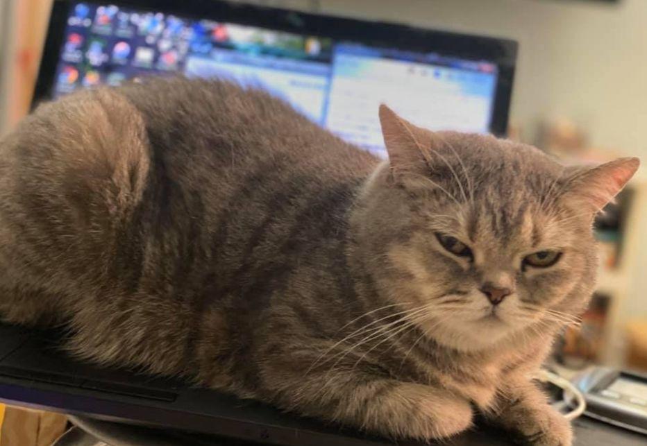 """""""在家办公,你问过猫的意见嘛?"""""""