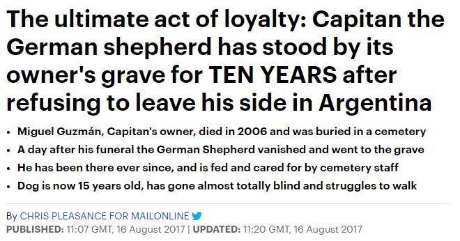 主人葬礼当天,他离奇失踪,12年后真相大白:自你离去,余生都在等你