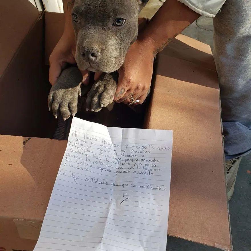小狗被遗弃,而它身上的一封信,让网友无比气愤