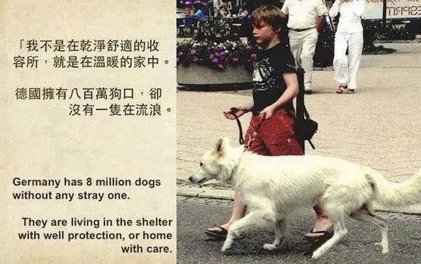 被虐流浪狗获救,费力向救助者摇尾,感动百万网友