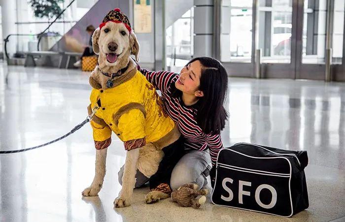 机场里游荡着22只狗和1只猪,而它们的目的,是为了逗你笑