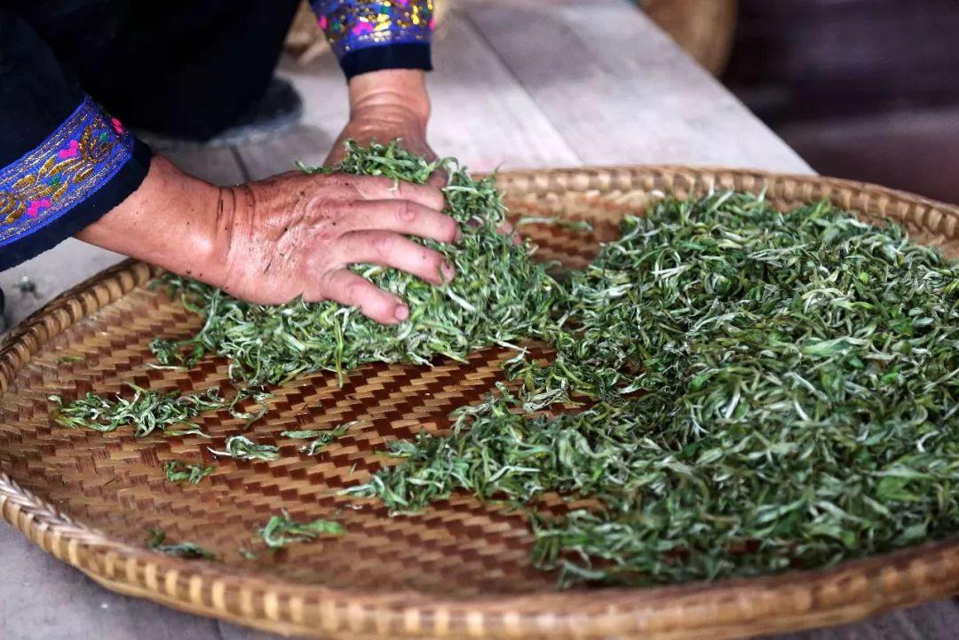 揉捻程度的不同将会对普洱生茶的转换起到什么样的作用
