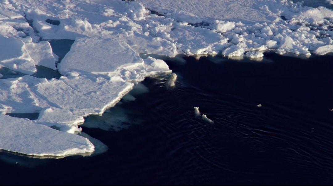 """南极""""发烧""""了,未来该何去何从?"""