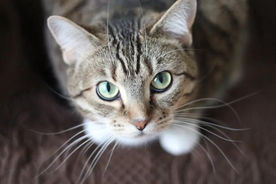 我妈杀了我养了两年的猫,还说是为了我好