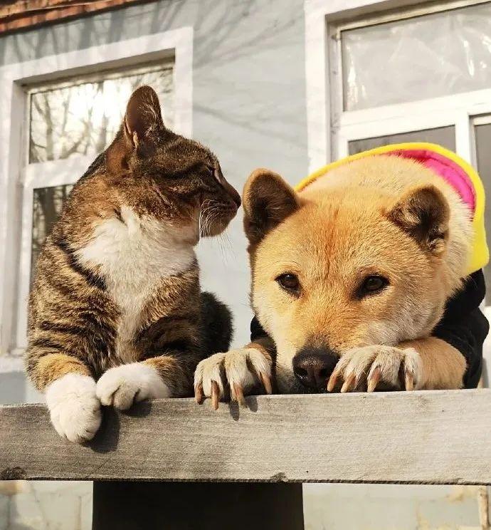 """超硬核!兵哥哥把""""小土猫""""训成了特种兵猫!"""