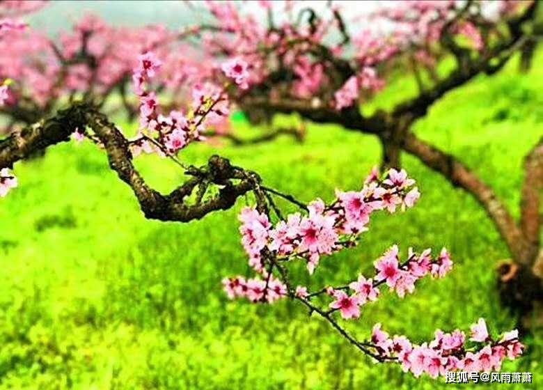 春怨,春梦短浅人未宿