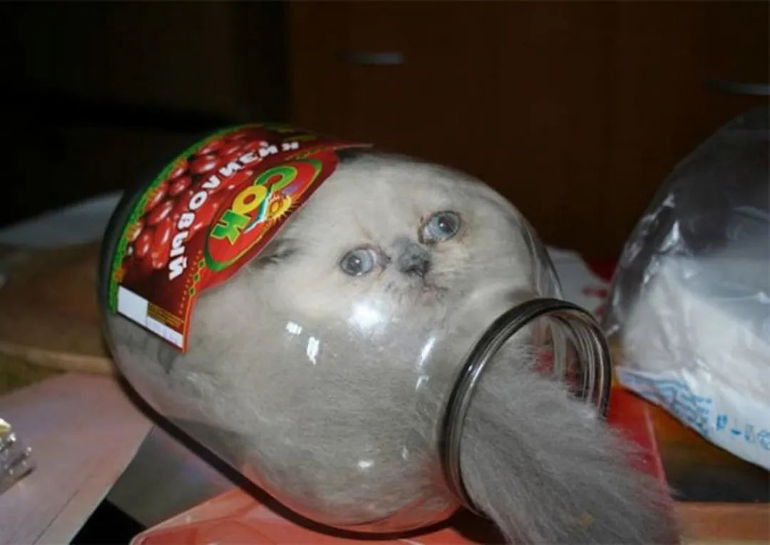 """日本网友评选出了""""最会伪装的喵星人""""…堪称猫界伪装者!"""