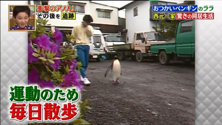 24年后这只小企鹅又看哭了所有人:它只是换个方式陪伴你