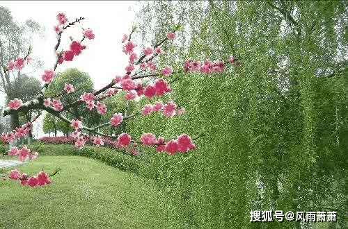 春梦,碧草红花与共