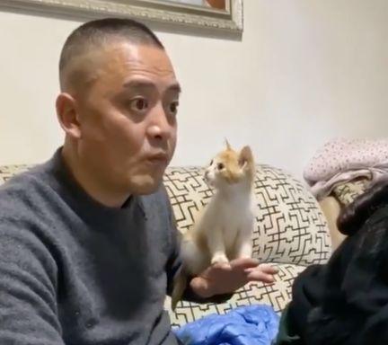 """当初不让养猫的老爸,最后竟变成了""""托猫老天王"""""""