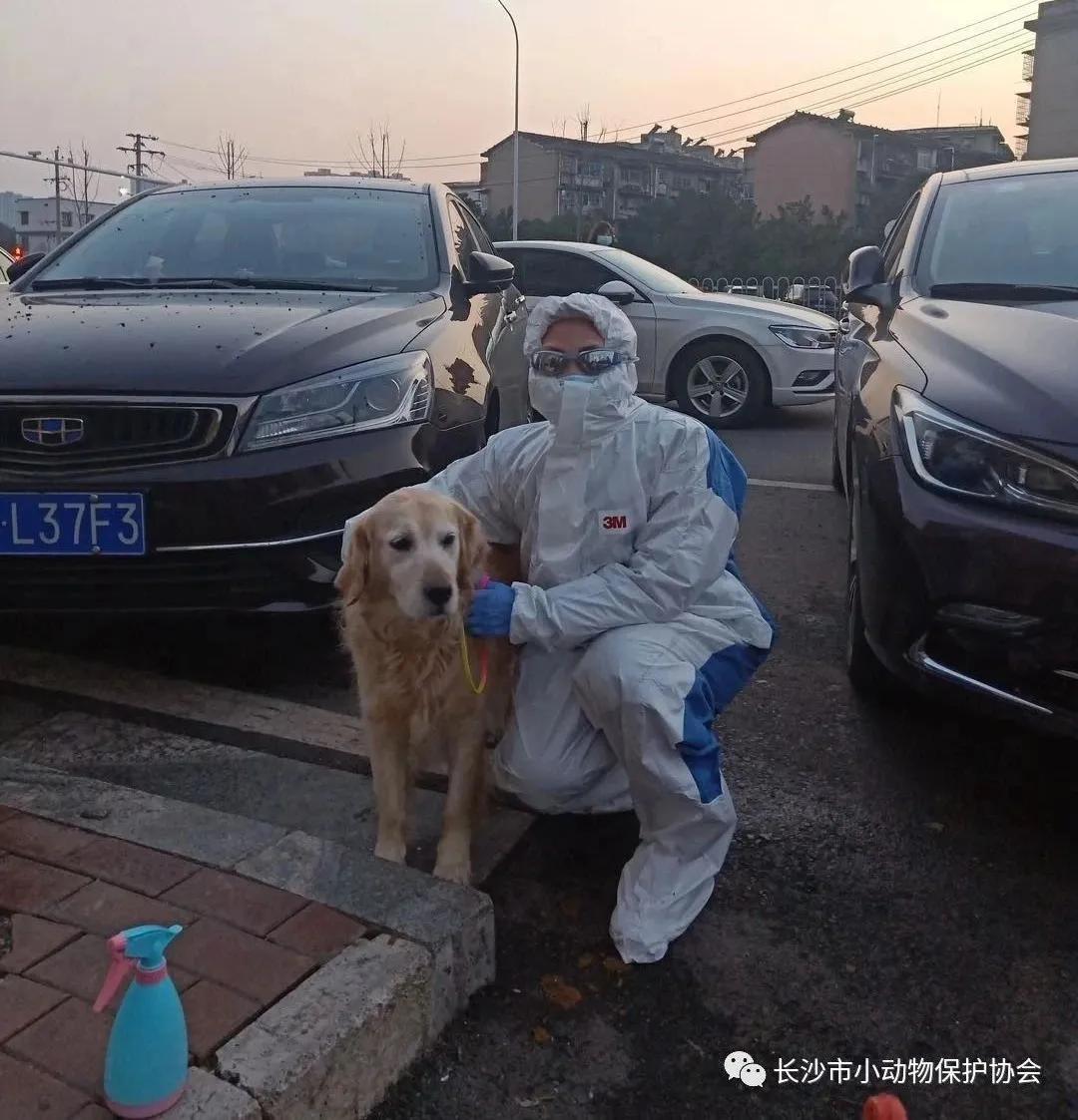 """""""武汉封城后,我接到了一份遛狗订单"""""""