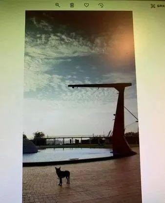 网友翻8年前的旧照片时,意外看到了刚领养的狗…