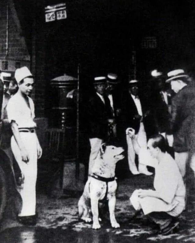 十多张罕见的忠犬八公生前等待主人的照片...至今依旧令人催泪