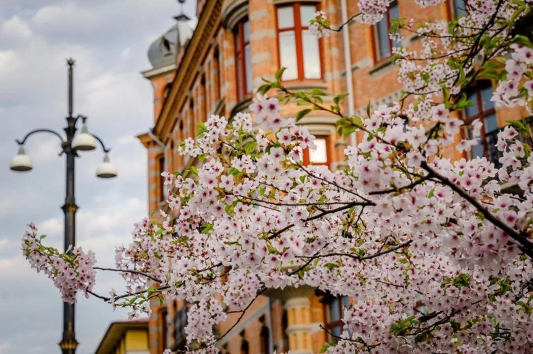 """春天的北欧,就是一个""""花花世界"""""""