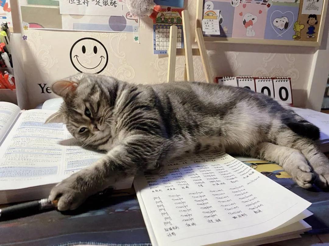 今天上网课的时候,老师给我们直播撸猫…