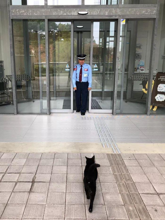 连续四年硬闯美术馆!日本这只猫让保安大叔亚历山大