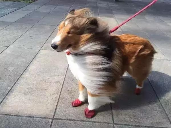 北京11级强风过境……遛狗的你们还好吗?