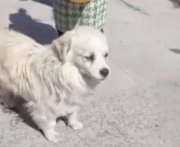 女子一年前救了一只流浪狗,一年后狗狗救了她们全家!