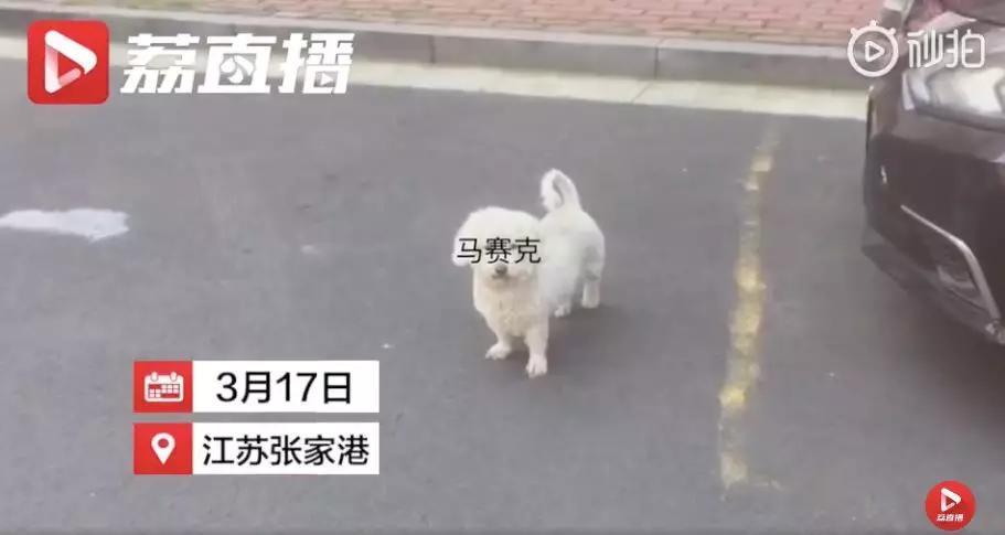 警察蜀黍送走失狗狗回家,意外发现狗主人在家里赌博
