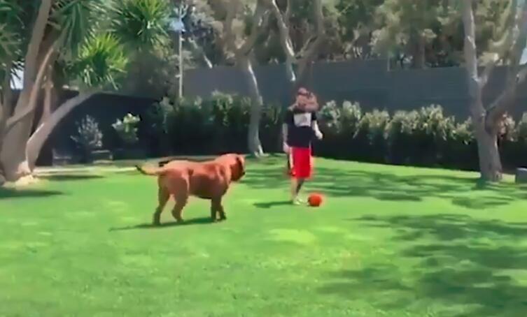 心疼狗子!梅西带两儿一狗玩抢圈  遛得狗晕头转向
